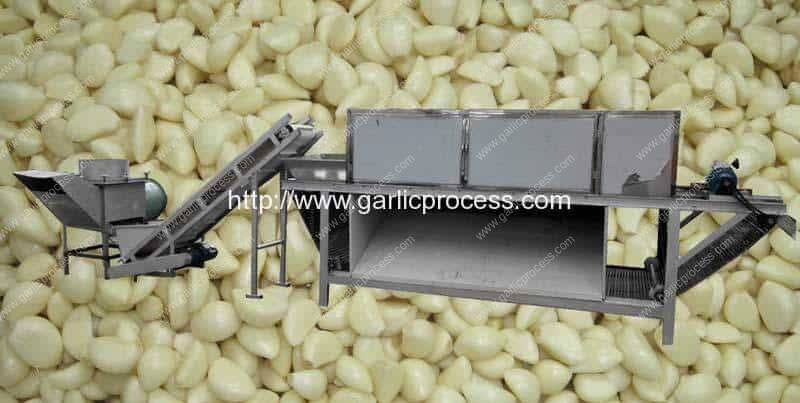 Automatic-Garlic-Separating-and-Chain-Type-Garlic-Peeling-Machine-Line