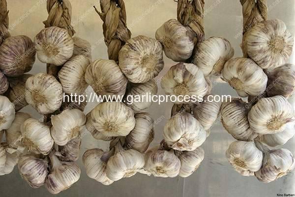 Garlic Selection and Storage