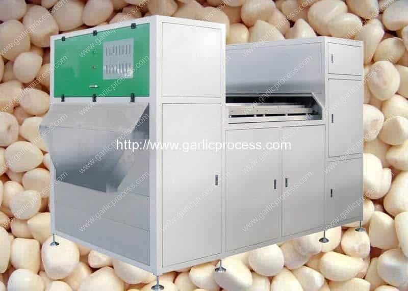 Máquina automática de triagem de cor de agulha de alho