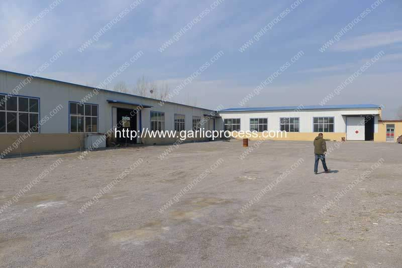 Garlic-Processing-Machine-Manufacture-Factory-Yard-Visit
