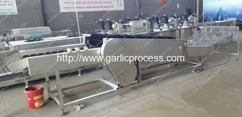 Garlic-Dry-Cleaning-Machine-(4)
