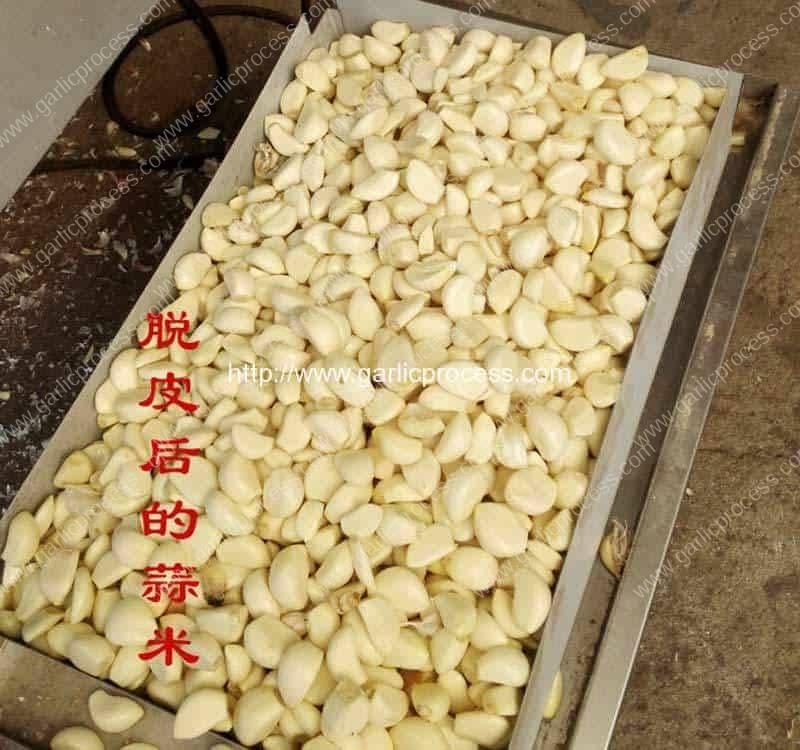 Automatic-Chain-Type-Garlic-Peeling-Machine-Result