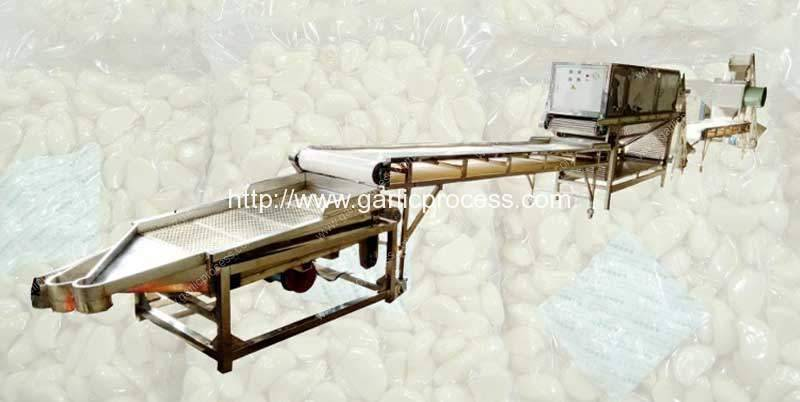 Full-Automatic-Dehydrate-Garlic-Production-Line-Supplier