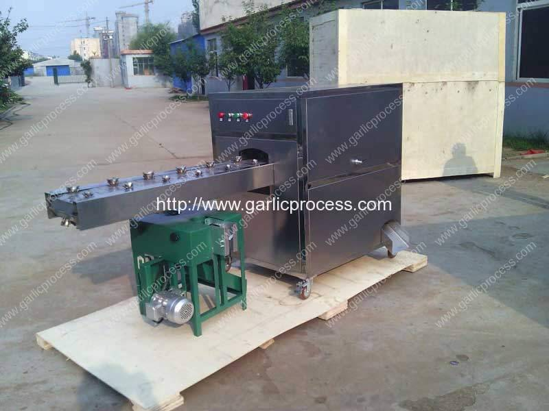 Garlic Concave Tail Cutting Machine and Leaf Cutting Machine Delivery for Egypt Customer