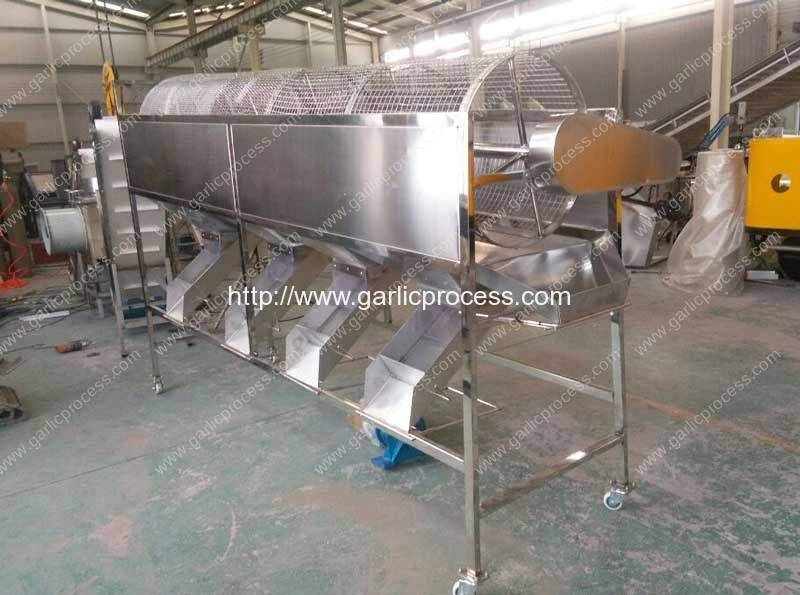 Automatic Garlic Breaking and Sorting Line for New Zealand Customer