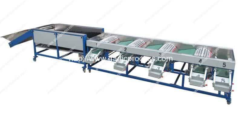 Automatic Garlic Sorting Machine with Brusher Cleaning Function