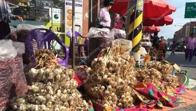Korean_garlic-processing-machine