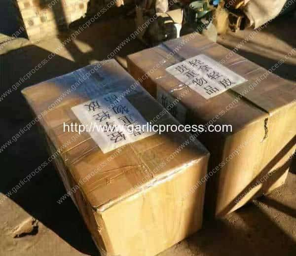 Garlic-Root-and-Leaf-Cutting-Machine-Delivery-for-USA-Customer