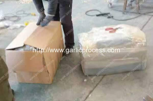 Garlic-Root-and-Leaf-Cutting-Machine-Delivery-for-USA-Market