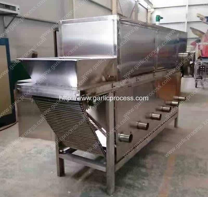 Chain Type Garlic Peeling Machine for Argentina Customer
