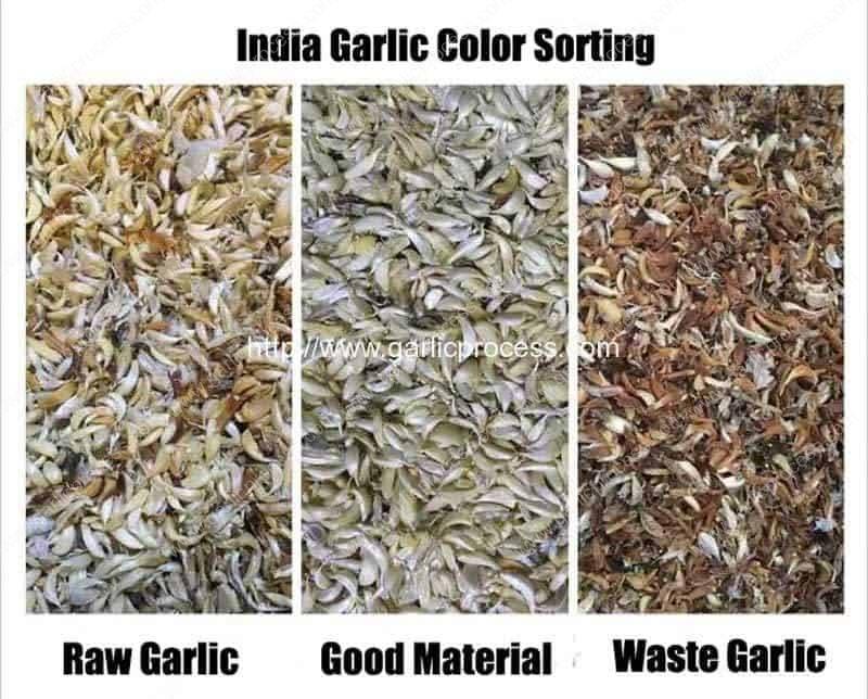 India-Garlic-Clove-Sorting-Machine