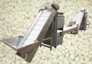 Automatic Garlic Clove Breaking and Peeling Line with Selection Conveyor