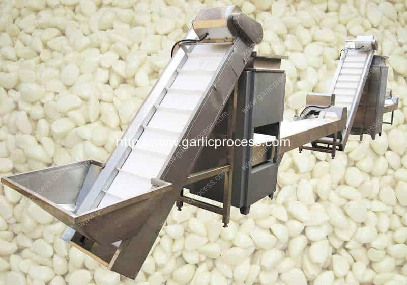 Automatic-Garlic-Clove-Breaking-and-Peeling-Line-with-Selecting-Conveyor for Sale