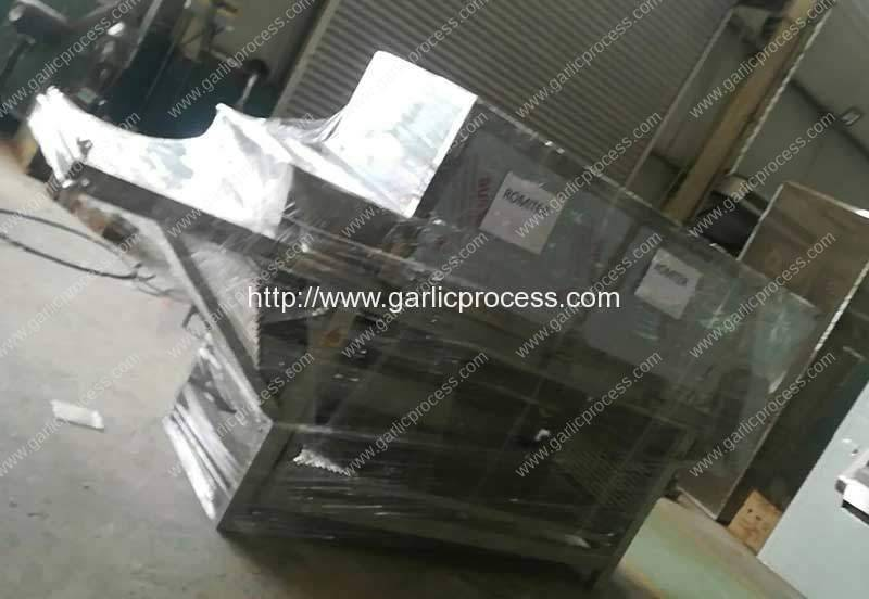 Automatic-Garlic-Clove-Breaking-and-Peeling-Machine-Delivery-for-Spain-Customer