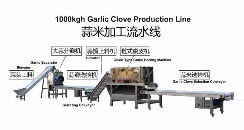 Full-Automatic-1000Kgh-Garlic-Clove-Production-Line-for-Sale