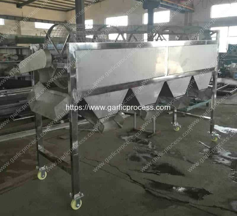 Automatic-Garlic-Seeds-Size-Sorting-Machine-for-Thailand