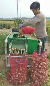 Automatic-Garlic-Stem-Leaf-Cutter-Machine