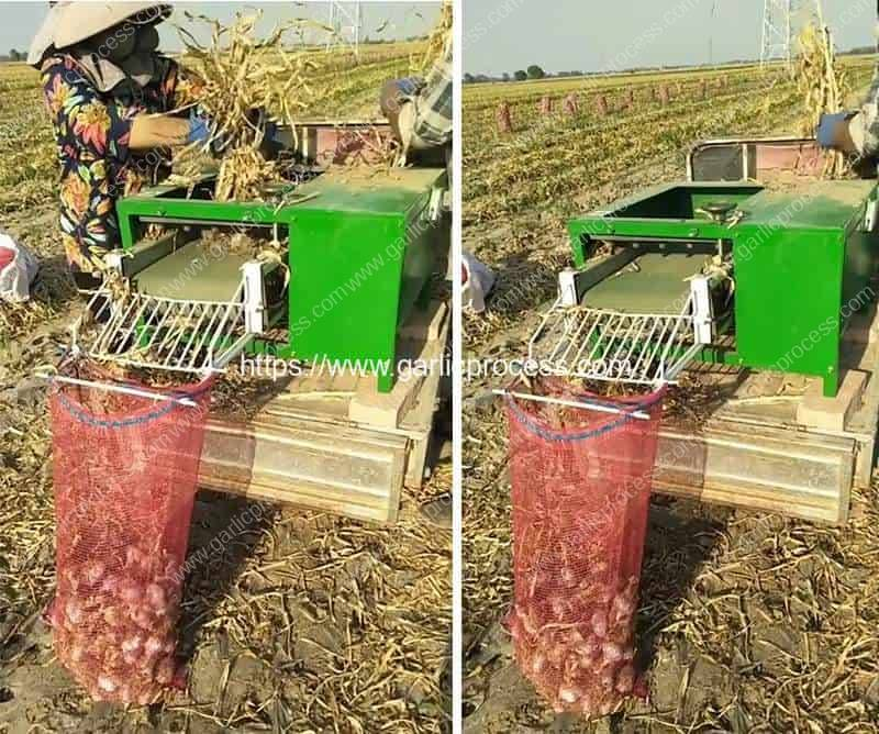 Automatic-Garlic-Stem-Leaf-Cutting-Machine