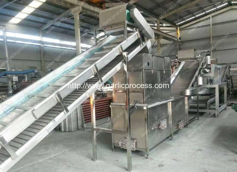 Automatic-Garlic-Slicing-Machine-in-Dehydrated-Garlic-Slice-Production-Line