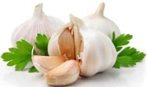 garlic-introduction