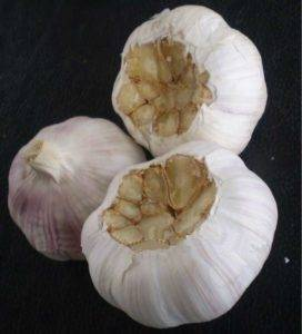 automatic-garlic-concave-root-cutting-machine