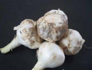 garlic-root-cutting-removing-machine-product