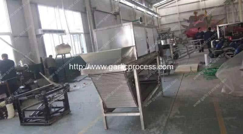 Garlic-Clove-Peeling-Machine-for-Garlic-Clove-Production-Line