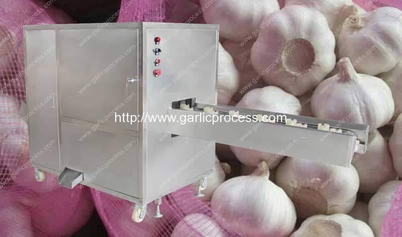 Automatic-Garlic-Root-Cutting-Machine-without-Cut-Garlic-Clove