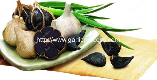 Black-Garlic-Farming-in-Korea