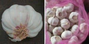 Garlic-Root-Cutting-Machine-Without-Cut-Garlic-Clove