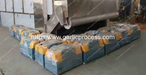 Garlic-Root-and-Leaf-Cutting-Machine-for-Canada-Market