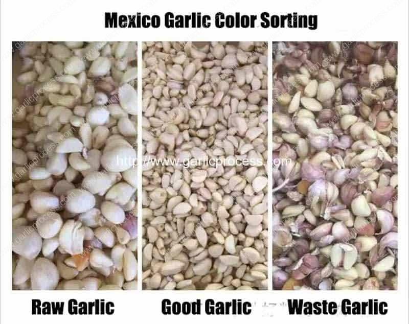 Mexico-Garlic-Clove-Color-Sorting-Machine