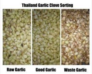 Thailand-Unpeeled-Garlic-Clove-Color-Sorting-Machine