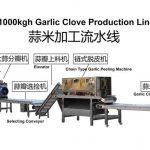 Полностью автоматическая линия по производству зубчиков чеснока 1000 кг / ч