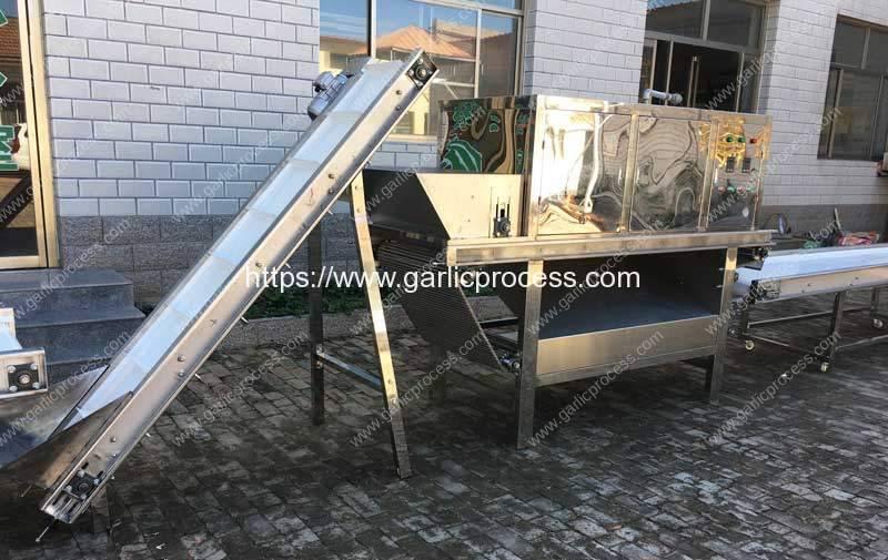 Chain-Type-Garlic-Peeling-Machine-for-Poland-Customer