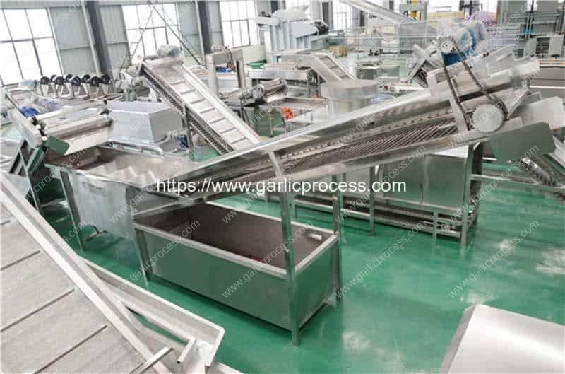 Wet-Type-Garlic-Stone-Removing-Machine-for-Garlic-Slice-Production-Line