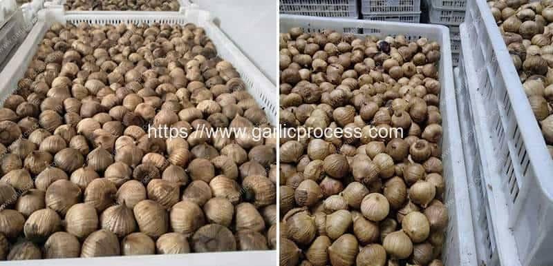 Black-Garlic-Storage-Basket