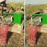 Automatic Garlic Stem Leaf Cutting Machine